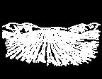 Zeichnung - Hügel mit Weinreben